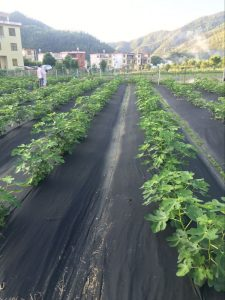 horticultural fabric, weed mat, weed control, row covers